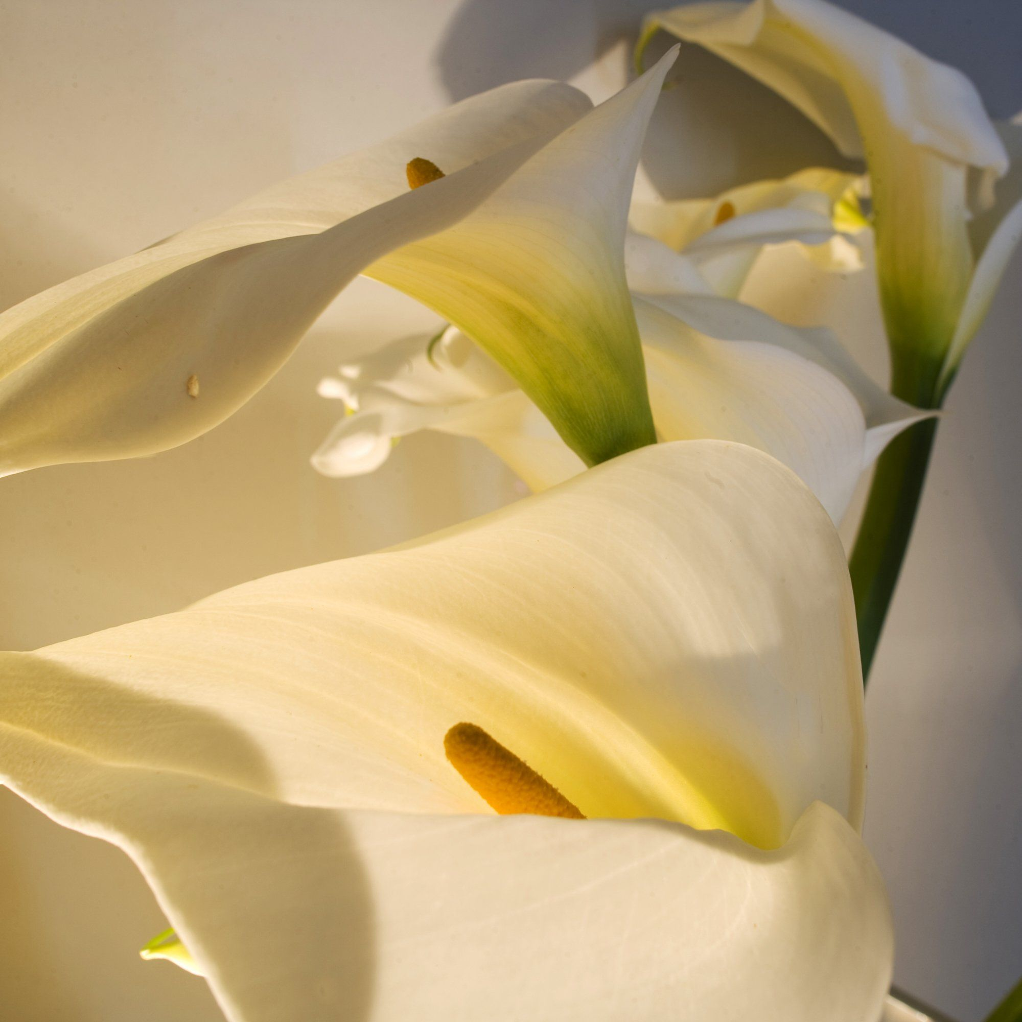 ronda flowers