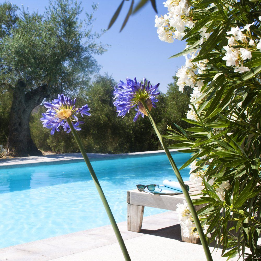 swimming poool luxury villa ronda