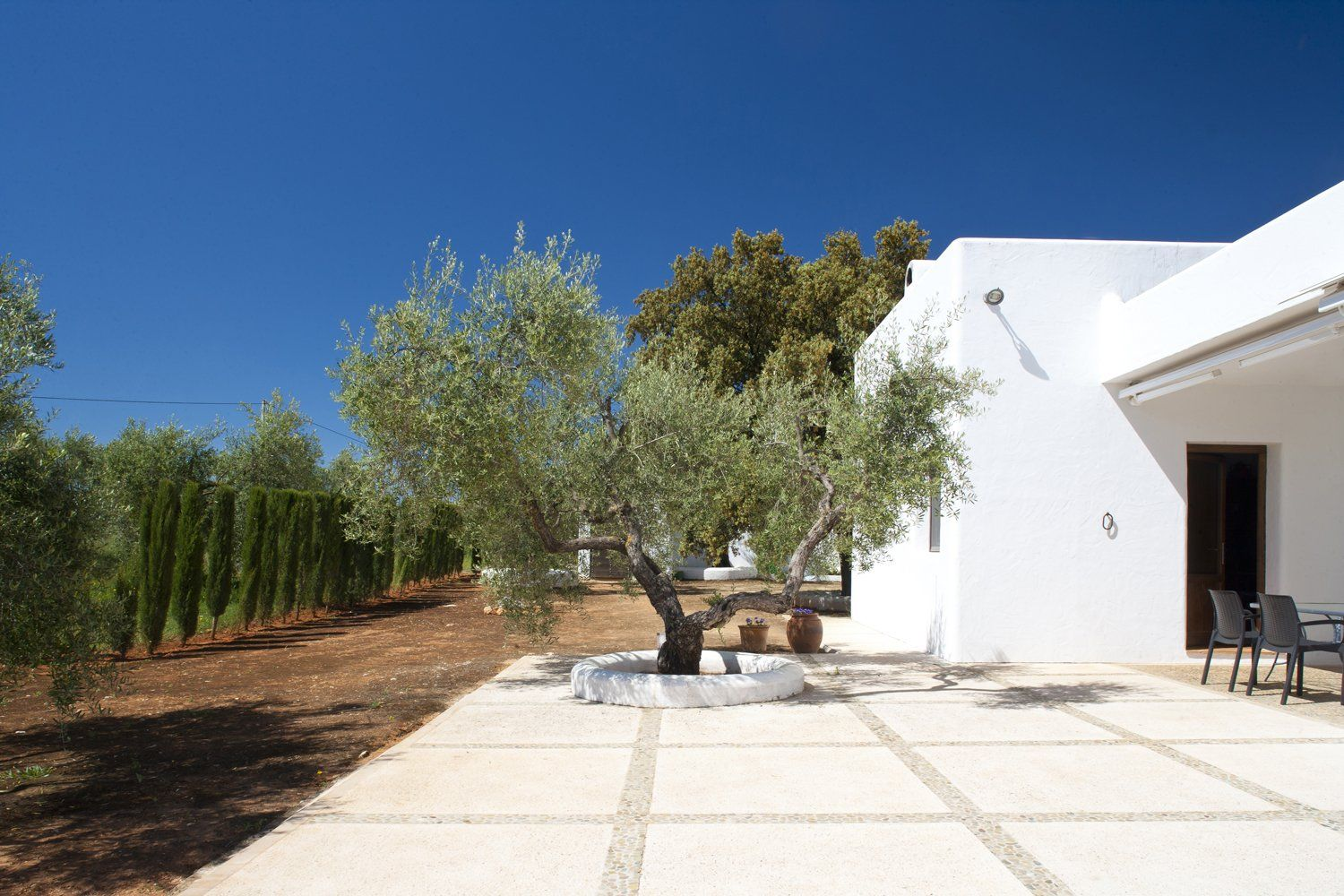 garden with olive tree andalucia