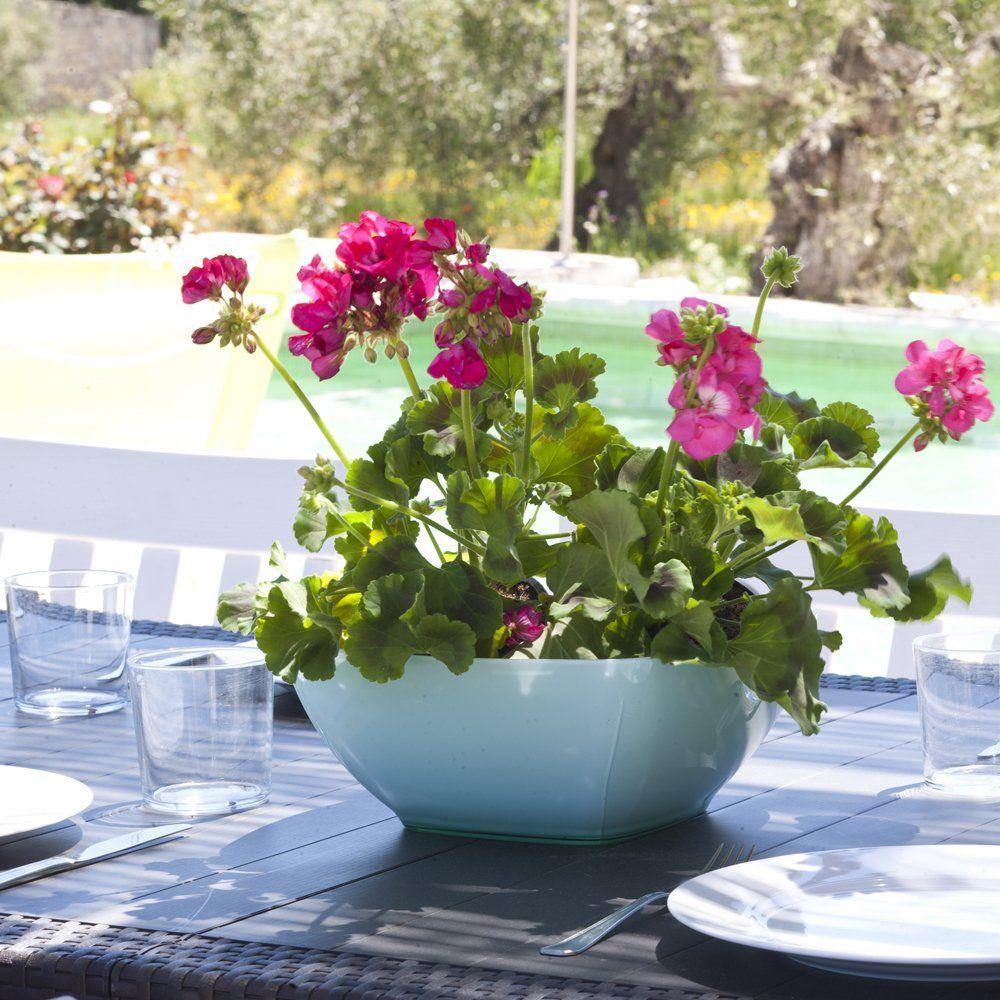 geraniums ronda andalucia
