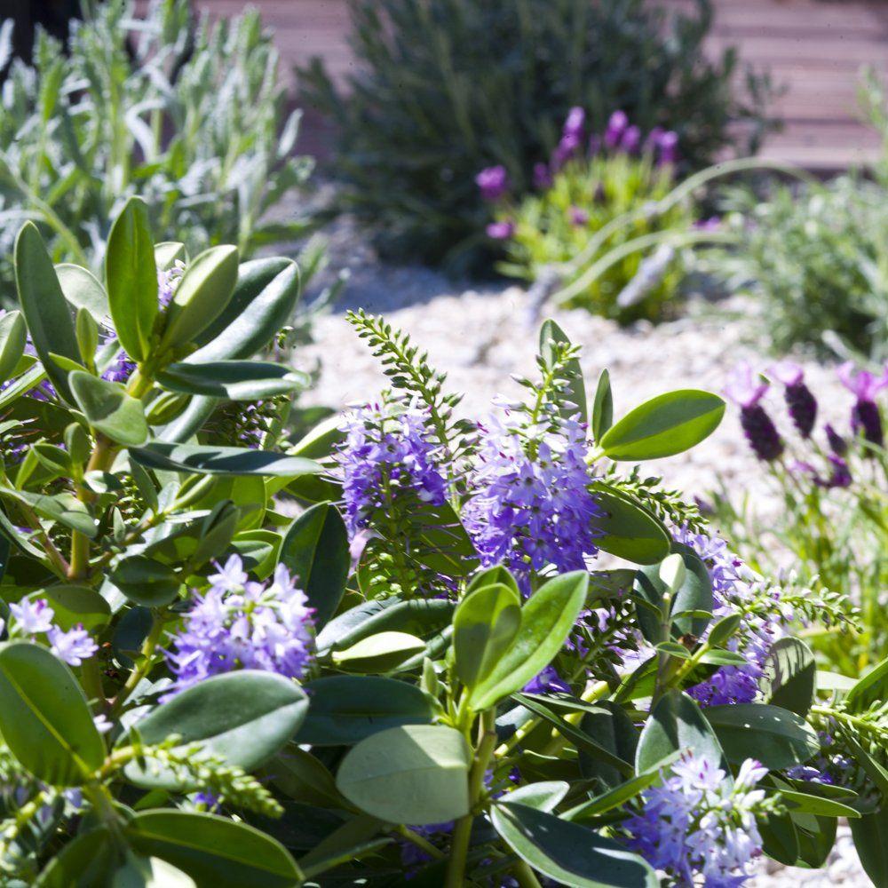 herb garden ronda