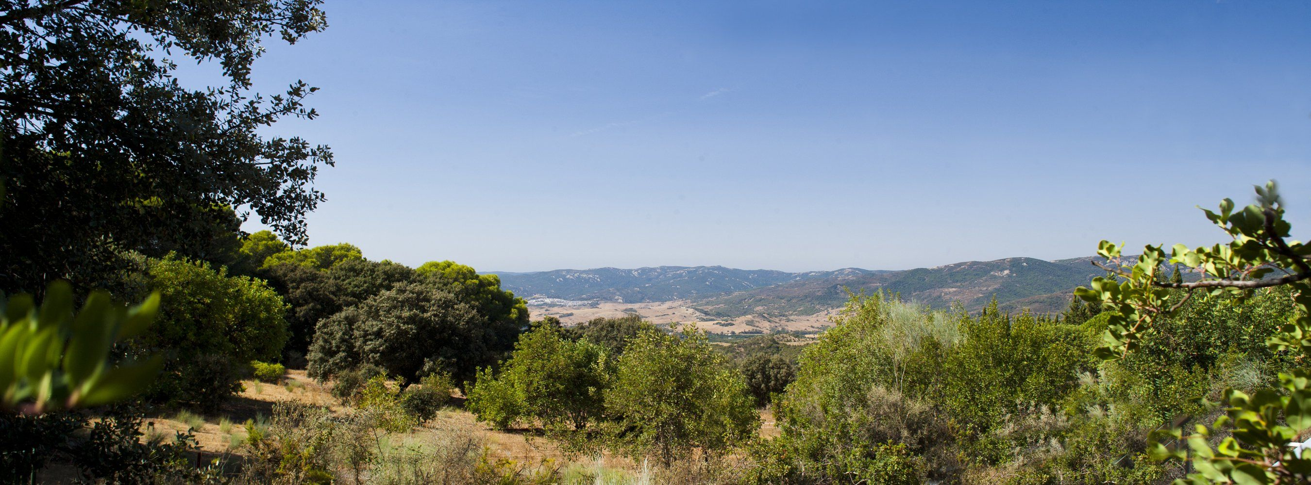 view andalucia